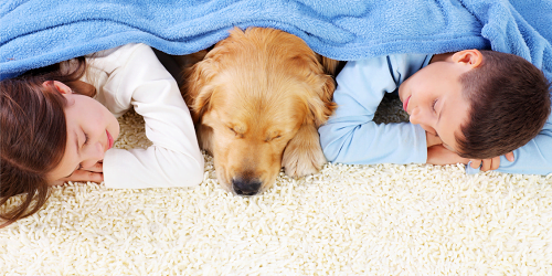Family Friendly Carpet Cleaning Services